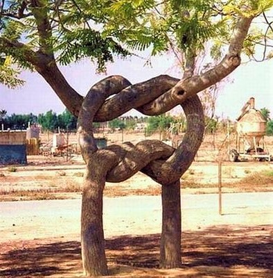 arbre noué