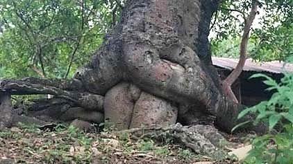 En pleine nature...on trouve des arbres naturistes !