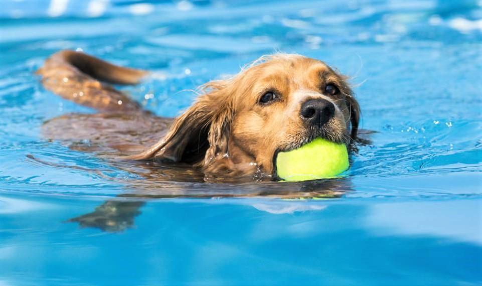 Mes conseils pour rafraîchir votre chien pendant l'été