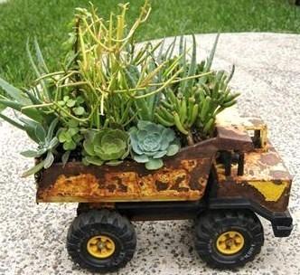 Plantes grasses sur roulettes