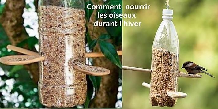 Comment nourrir les oiseaux pendant l'hiver