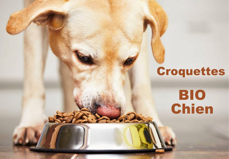 Les chiens doivent-il être exclusivement nourris à la croquette ?
