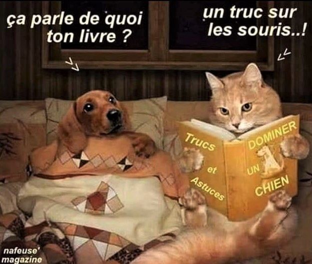 Humour Photos montages animaux