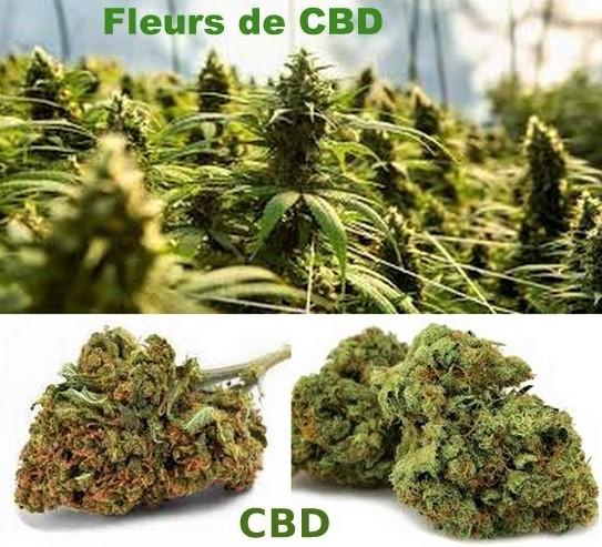 Les fleurs CBD : quelles vertus sur la santé?