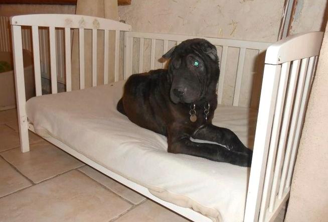 Id es pour faire niche et couchette d 39 int rieur pour - Plan pour faire une niche pour chien ...