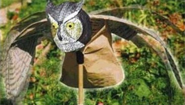 Astuces pour protéger fruits et plantations des attaques des oiseaux.