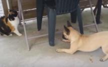 Louna veut jouer avec le chat