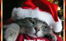 Gifs animés chats de Noël