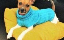 Astuces faire un pull pour chien