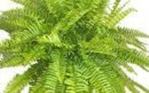 Ces plantes qui purifient l'air de nos maisons