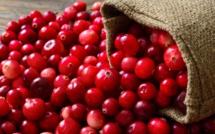 Des cranberries pour lutter contre les cystites