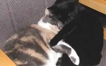 Images drôles : la belle vie des chats !