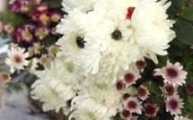 Déco insolite : des bouquets chiens-fleurs !
