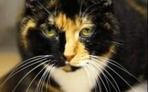 L'incroyable aventure de Willow le chat !