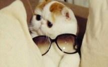 Le chat à lunettes !