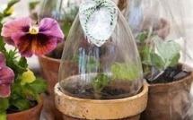 Astuces pour protéger boutures et semis !