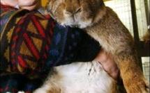 Le lapin le plus gros du monde !