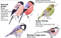 Reconnaître les oiseaux du jardin