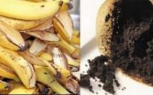 5 engrais naturels pour embellir vos plantes